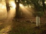 03_bdm_10-2013_kroepelin_juedischer_friedhof