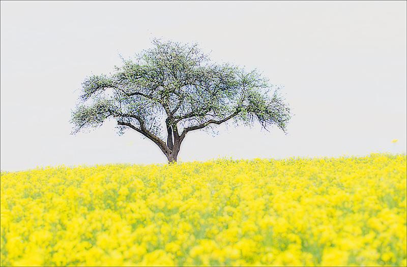 Baum_Apfelbaum.jpg