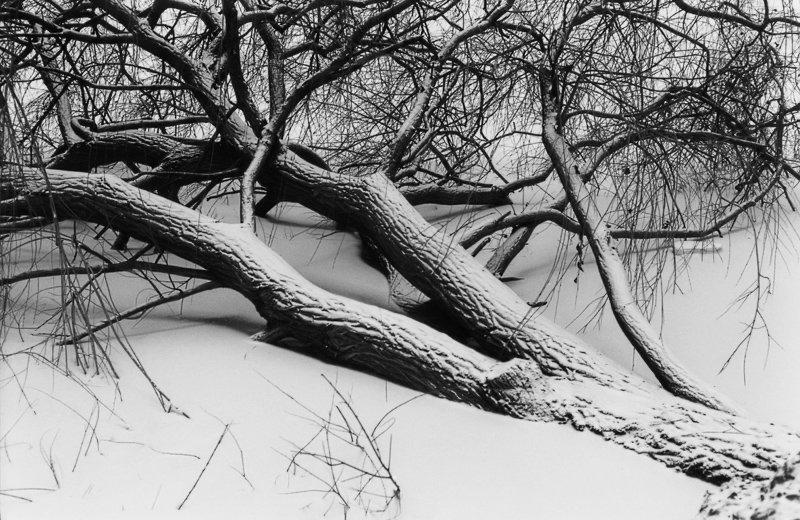 01_Baum.jpg