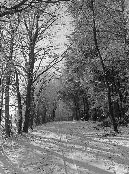 02A_Winterwald.jpg
