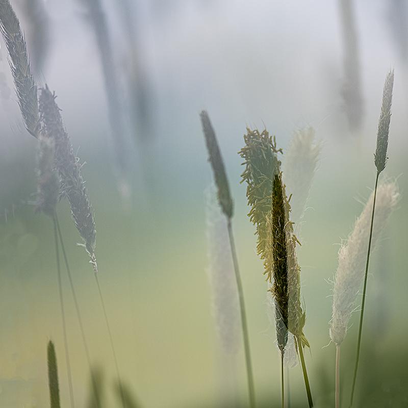 _Gräser1.jpg