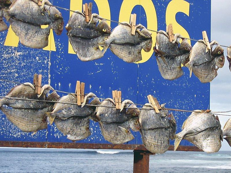 05_Luftfische.jpg